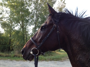 After the gallop