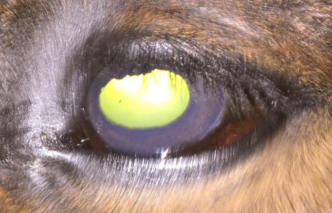 Howdy eye day 10