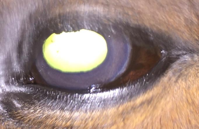 Howdy eye day 13