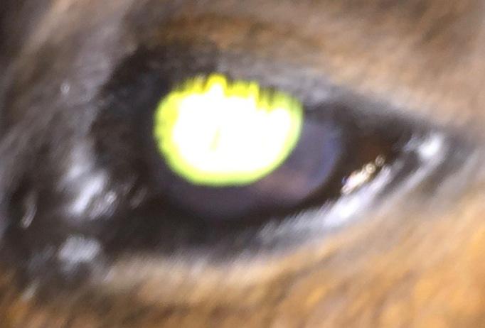 Howdy eye day 15