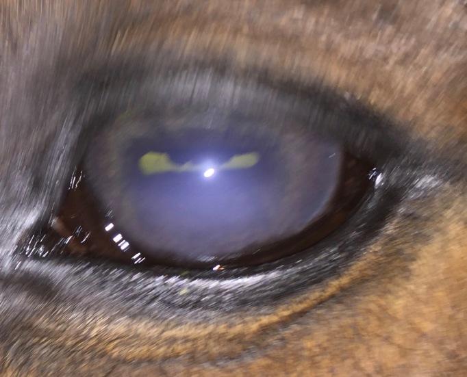 Howdy eye day 0